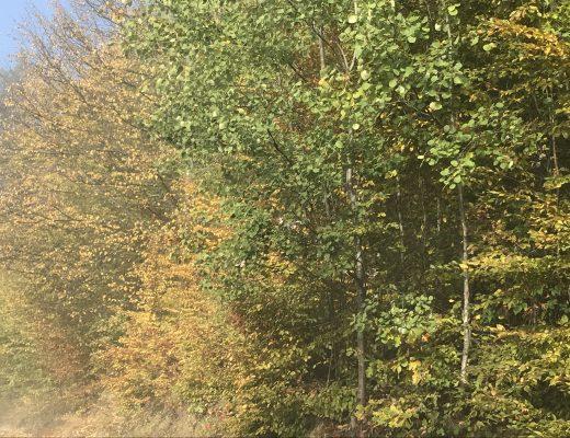 de kleuren in de herfst in Polen